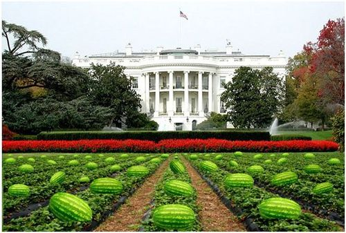Watermelonwhitehousefeb28