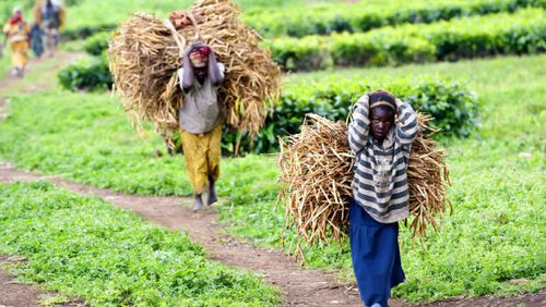 African-farmers-generic_620x350