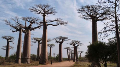 181231091649-baobab-full-169