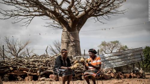 181231090409-baobab-trees-super-169