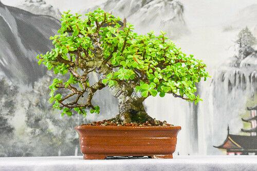 Tree2s-l500