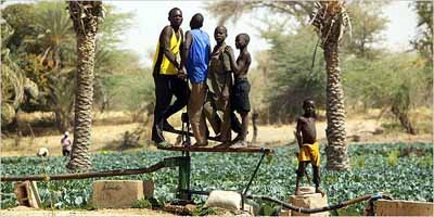 Nigerfarmers