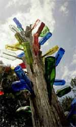bottletree1